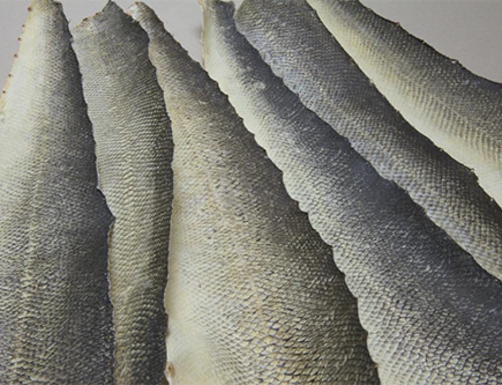 Vissenhuid2